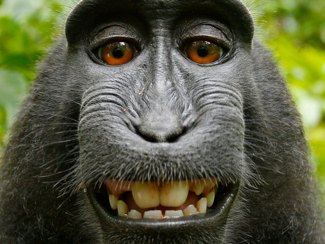 https://arstechnica.com/tech-policy/2018/04/monkey-selfie-lawsuit-finally-ends-court-affirms-adorable-macaque-cant-sue/