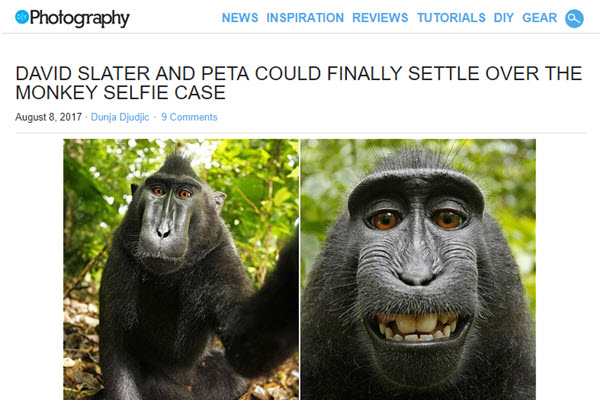 Screenshot of monkey selfie lawsuit article at DIYPhotography