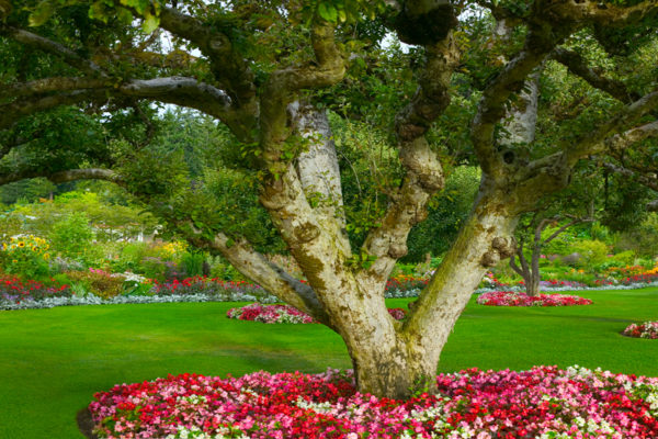 Butchart Gardens, Victoria, BC Canada Panoramic landscape