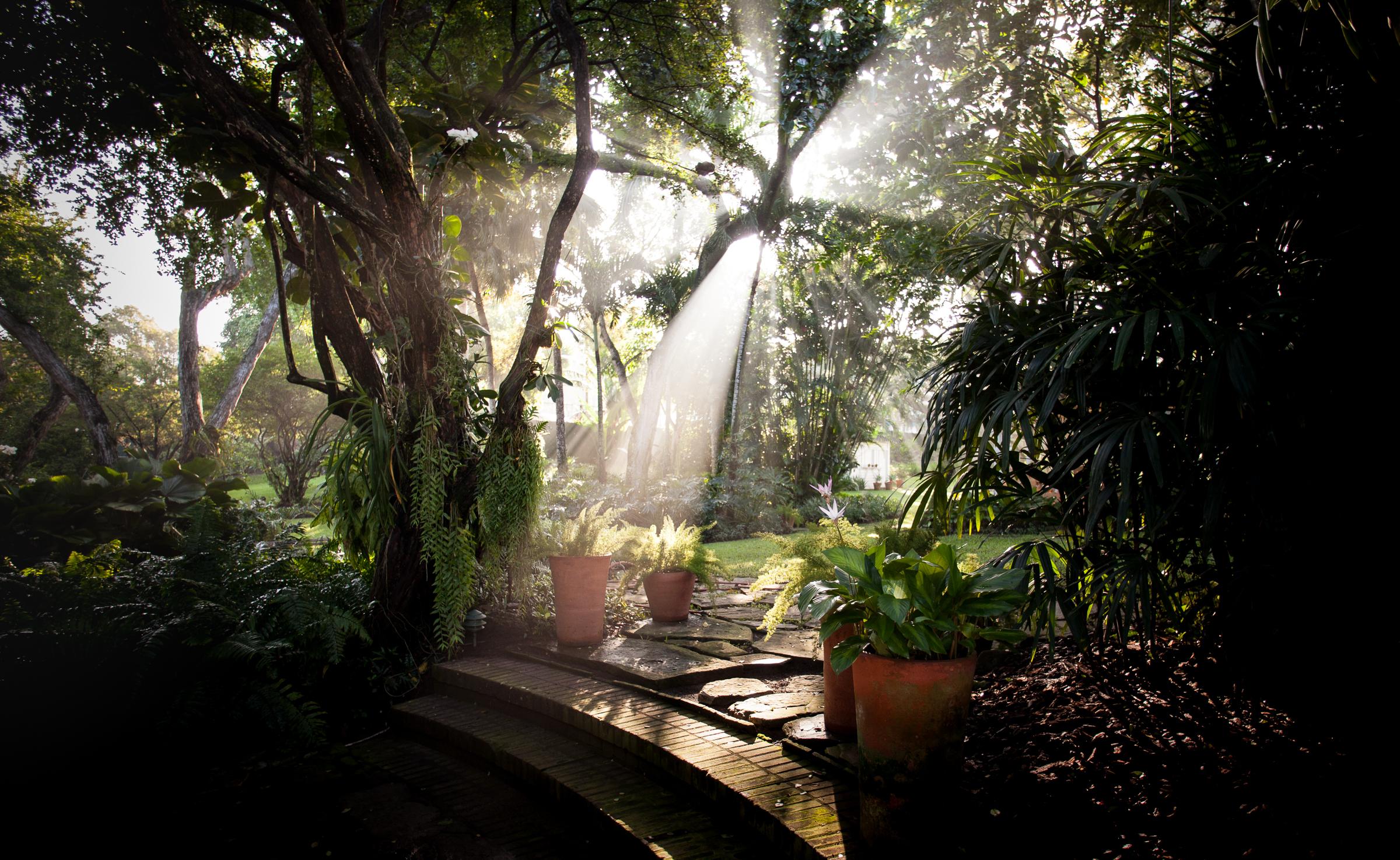 photograph of garden