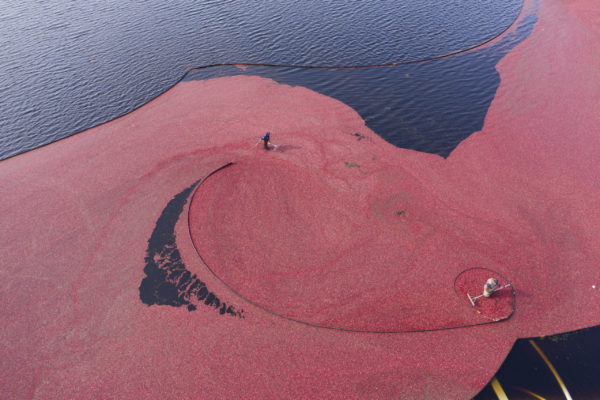"""""""Cranberry Harvest Aerial"""" by Steve Dunwell"""