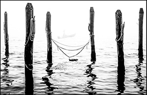 © Carol Julien